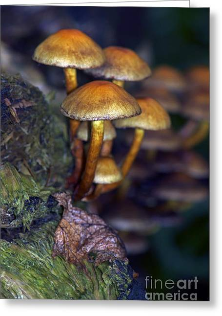 Toadstools Greeting Cards - Mushrooms Aglow Greeting Card by Sharon  Talson