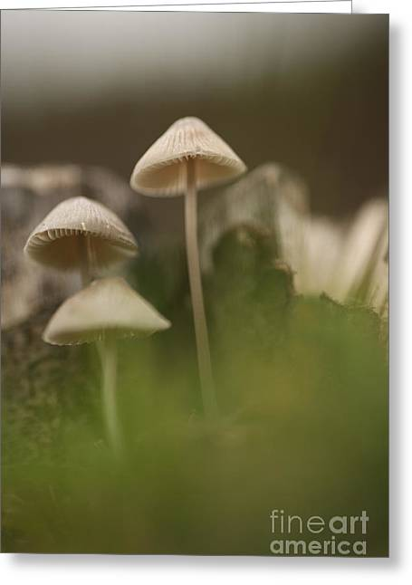 Fungi Greeting Cards - Mushrooms Greeting Card by Alon Meir