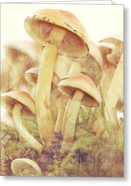 Fungal Greeting Cards - Mushrooms Greeting Card by Heike Hultsch