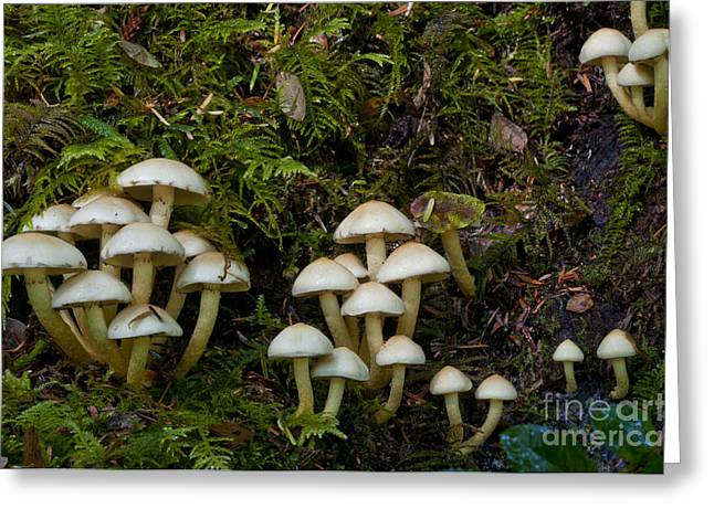 Mushrooms In The Oregon Coast Range Greeting Card by William H. Mullins