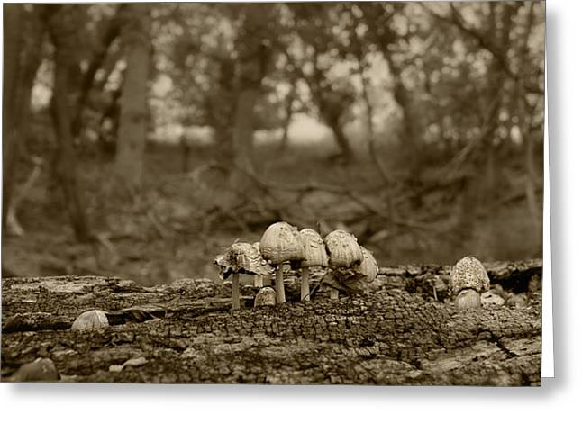 Toadstools Greeting Cards - Mushrooms in the Woods Greeting Card by Nikolyn McDonald