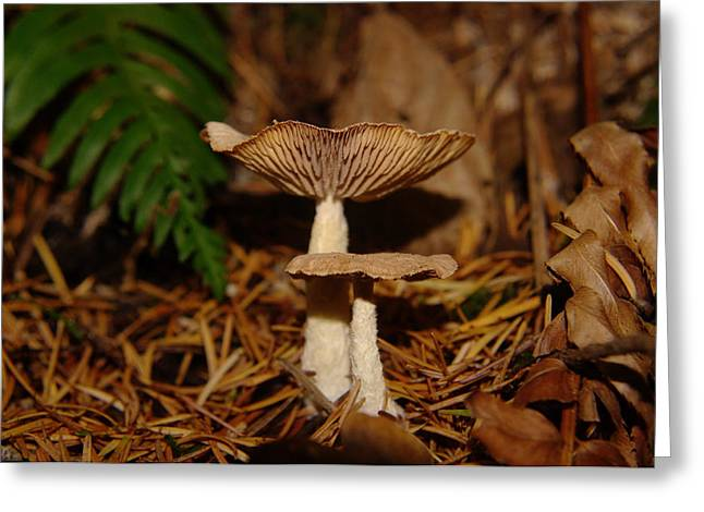 Forest Floor Greeting Cards - Mushrooms Greeting Card by Jeff  Swan