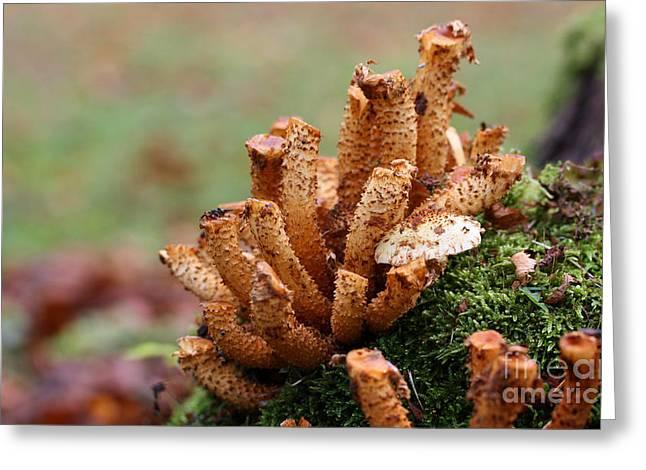 Button Mushrooms Greeting Cards - Mushrooms On A Tree Stump Greeting Card by Jolanta Prunskaite