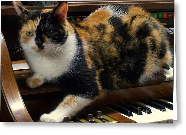 House Pet Greeting Cards - Music Of The Night Greeting Card by Lingfai Leung