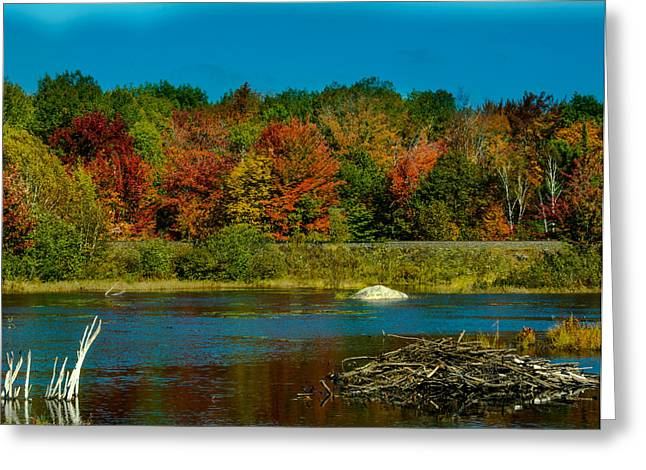 Dam Framed Prints Greeting Cards - Muskoka Colours Greeting Card by James Canning