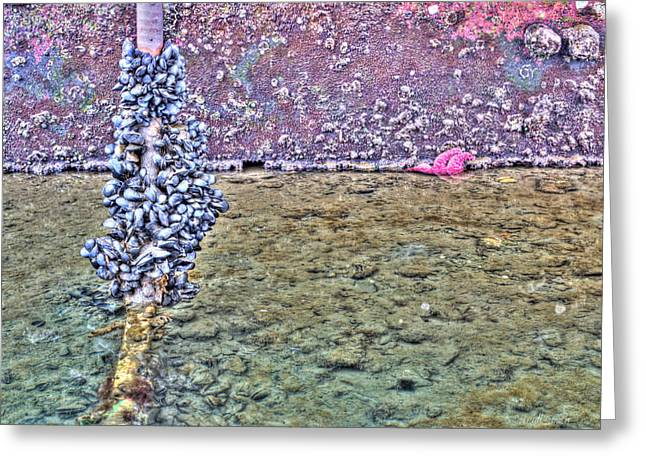 Mussles And A Starfish Greeting Card by Heidi Smith