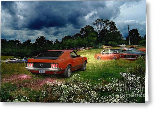 Forgotten Digital Greeting Cards - Mustang Field Greeting Card by Tom Straub