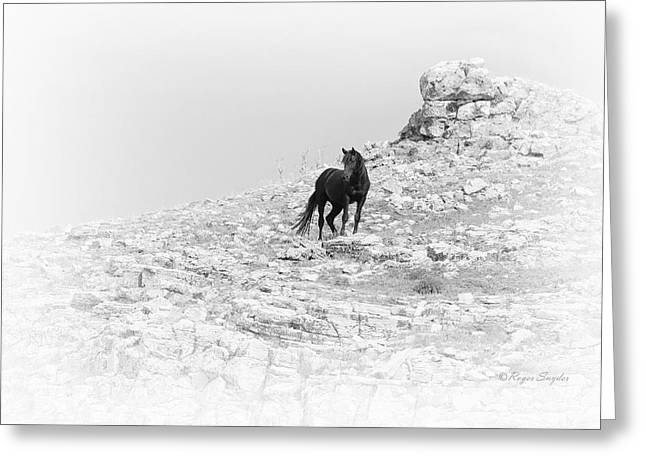 Mustang On Hill 2 Bw Greeting Card by Roger Snyder