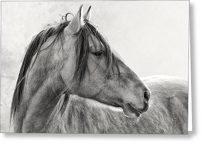 Ron Mcginnis Greeting Cards - Mustang Greeting Card by Ron  McGinnis