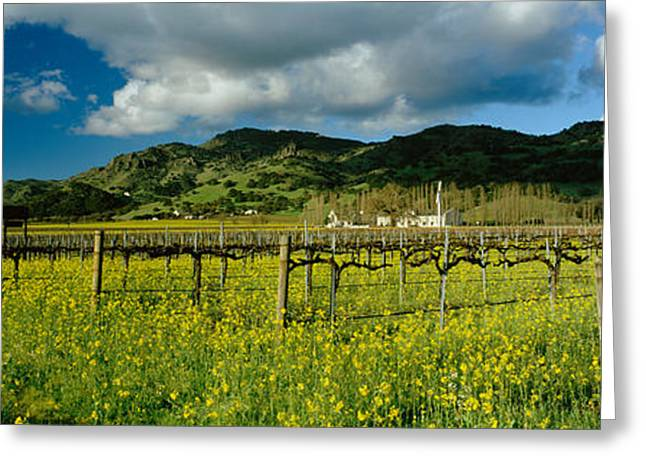 Grape Vineyard Greeting Cards - Mustard Crop In A Field Near St Greeting Card by Panoramic Images