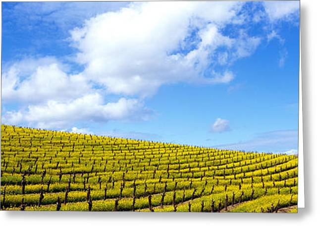 Undulating Greeting Cards - Mustard Fields, Napa Valley Greeting Card by Panoramic Images