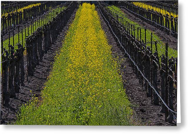 Sonoma Photographs Greeting Cards - Mustard grass in vineyards Greeting Card by Garry Gay