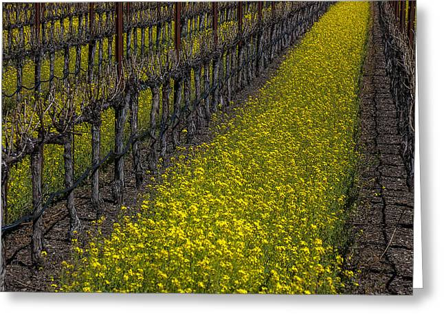 Mustard Greeting Cards - Mustrad grass in the vineyards Greeting Card by Garry Gay