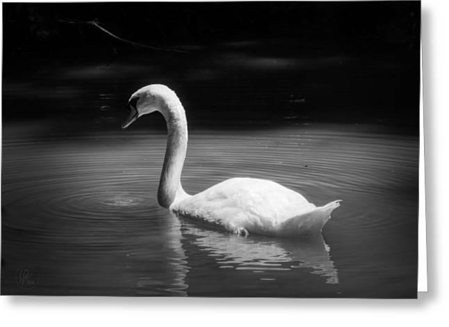 Mute Swan 001 Greeting Card by Lance Vaughn