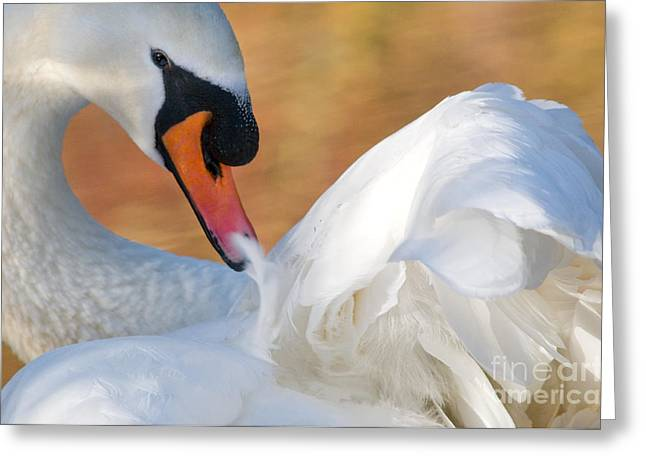 Muted Greeting Cards - Mute Swan 1 Greeting Card by Terry Elniski
