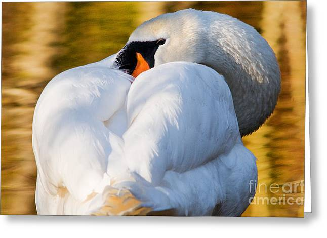 Muted Greeting Cards - Mute Swan 2 Greeting Card by Terry Elniski
