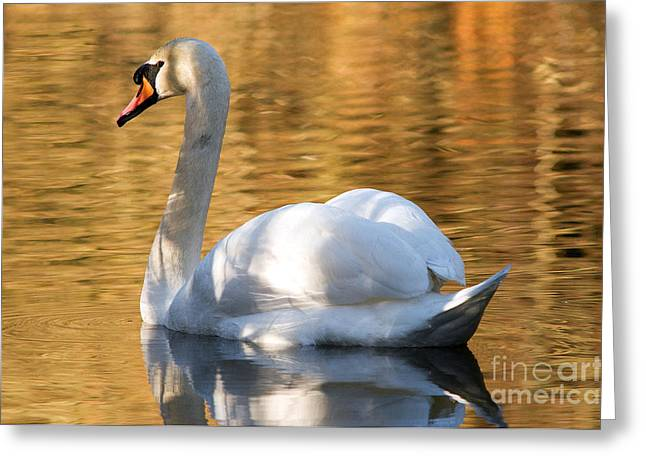 Muted Greeting Cards - Mute Swan 3 Greeting Card by Terry Elniski
