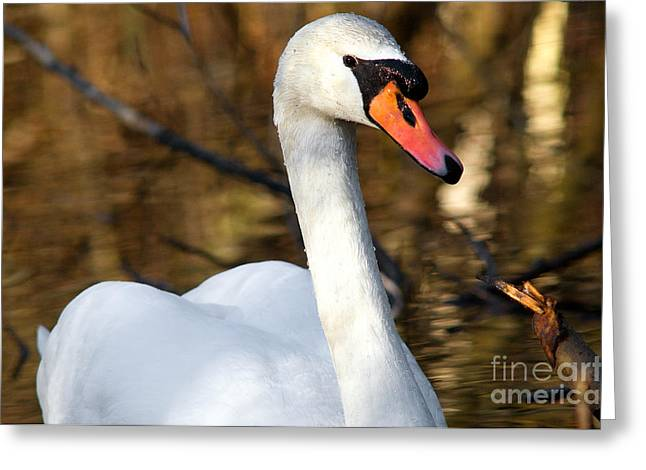 Muted Greeting Cards - Mute Swan 4 Greeting Card by Terry Elniski