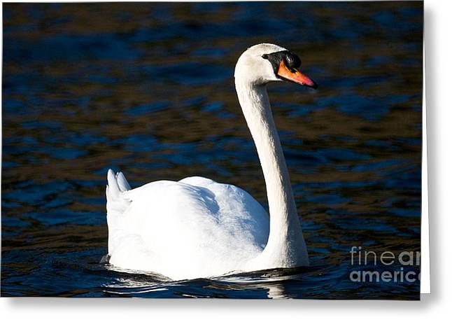Muted Greeting Cards - Mute Swan 6 Greeting Card by Terry Elniski