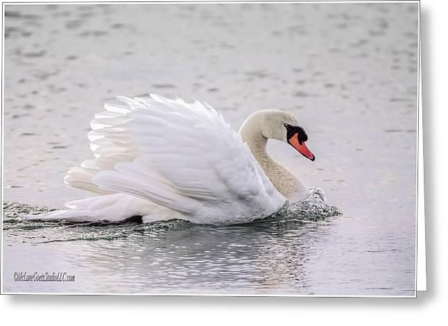 Snow Scene Landscape Greeting Cards - Mute Swan Algonac Michigan Greeting Card by LeeAnn McLaneGoetz McLaneGoetzStudioLLCcom