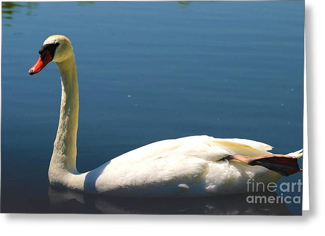 Muted Greeting Cards - Mute Swan Greeting Card by Corey Ford