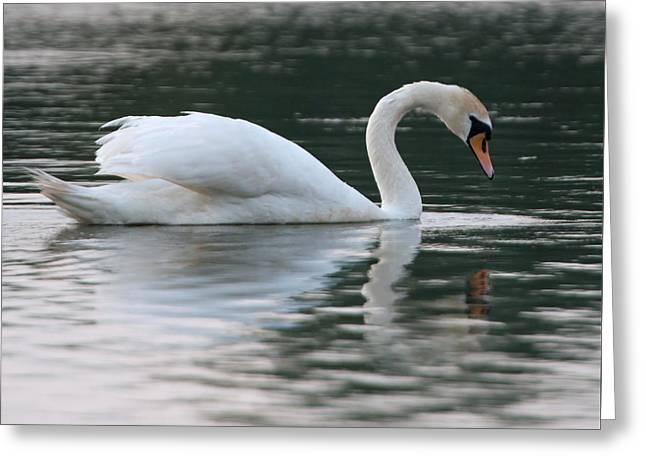 Muted Greeting Cards - Mute Swan Greeting Card by Ellen Henneke