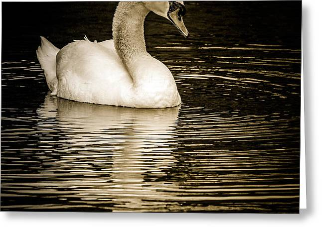 Mute Swan II Greeting Card by Jim Nelson