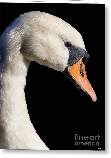 Print Ceramics Greeting Cards - Mute Swan Greeting Card by Wobblymol Davis
