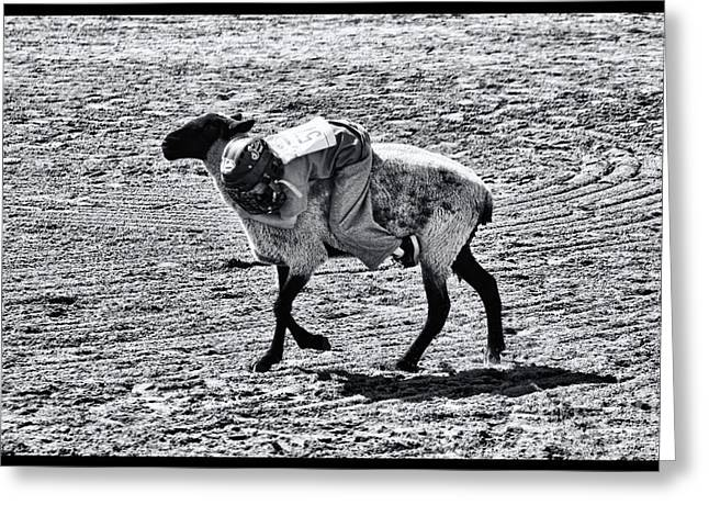 Cave Creek Cowboy Greeting Cards - Mutton Busting 1 Greeting Card by Tommy Anderson