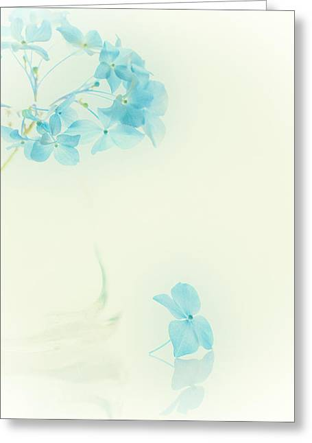 Artistic Photography Greeting Cards - My baby blue Greeting Card by Constance Fein Harding