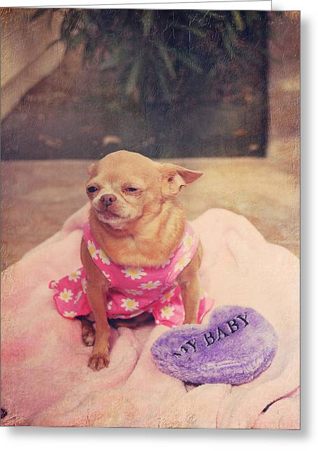 Chihuahua Portraits Greeting Cards - My Baby Greeting Card by Laurie Search