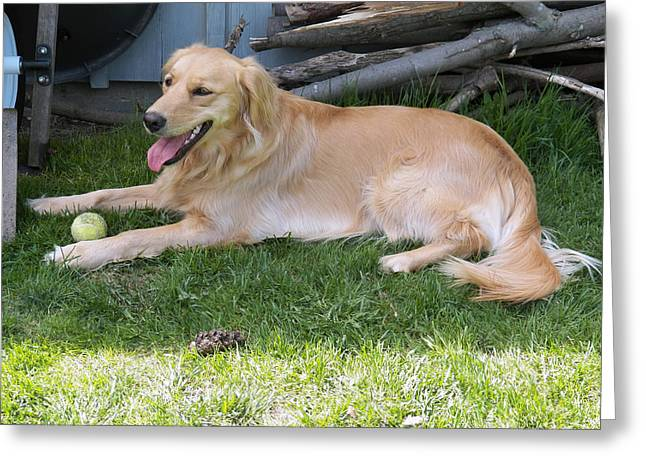 Dog With Tennis Ball Greeting Cards - My Ball Greeting Card by Corinne Elizabeth Cowherd