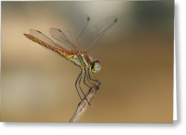My Best Dragonfly Greeting Card by Janina  Suuronen
