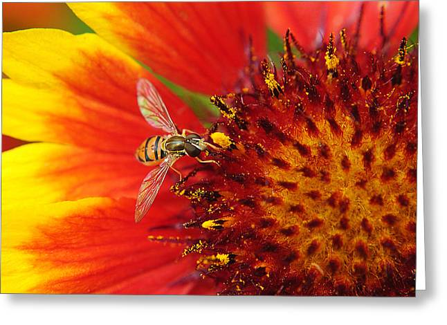 Amazing Sunset Greeting Cards - My Best Macro Greeting Card by Frozen in Time Fine Art Photography