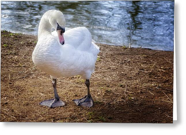 Reserve Greeting Cards - My Better Side Greeting Card by Joan Carroll
