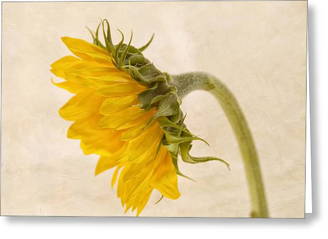 Yellow Sunflower Greeting Cards - My Better Side Greeting Card by Kim Hojnacki