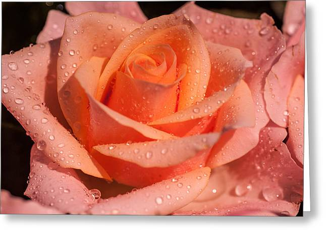 Get Well Flowers Greeting Cards - My Birthday Rose Greeting Card by Jenny Rainbow