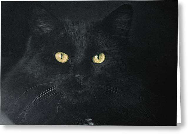 Confident Cat Greeting Cards - My Black Golden-Eyed One Greeting Card by Daniel Furon