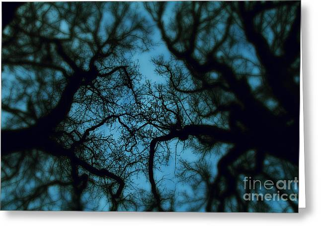 Evil Greeting Cards - My Blue Dark Forest Greeting Card by Stylianos Kleanthous