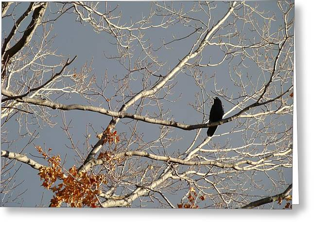 Photos With Red Greeting Cards - My Branch Greeting Card by Gothicolors Donna Snyder