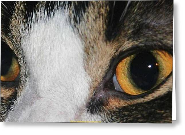 Book Cover Art Greeting Cards - My Cat Is The Cat Of All Cats Greeting Card by PainterArtist FIN