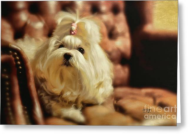 Maltese Dogs Greeting Cards - MY Chair Greeting Card by Lois Bryan