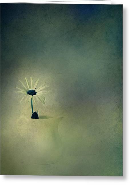 Little Greeting Cards - My Daisy My Daisy My Little Blue Daisy Greeting Card by Constance Fein Harding