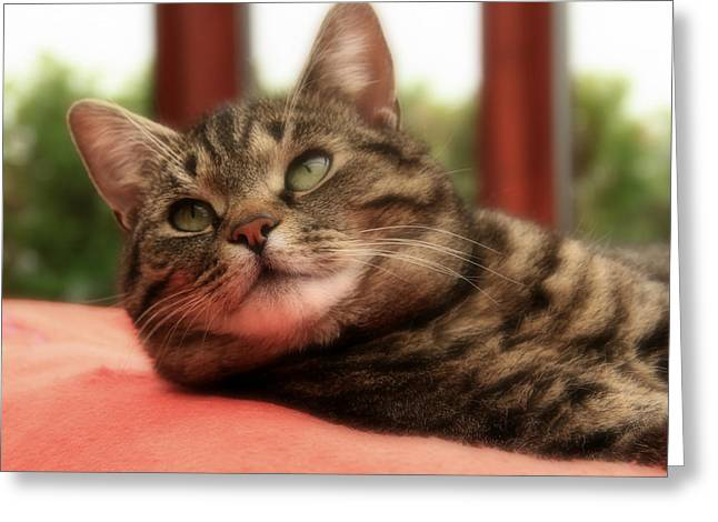 Photo Of Cat Greeting Cards - My Darling Little Mosey Greeting Card by Anne Macdonald