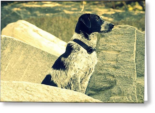 Saki Art Greeting Cards - My Dog Aska Greeting Card by Saki Art
