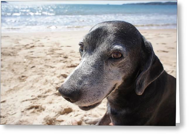 Chikako Hashimoto Lichnowsky Greeting Cards - My dog Greeting Card by Chikako Hashimoto Lichnowsky