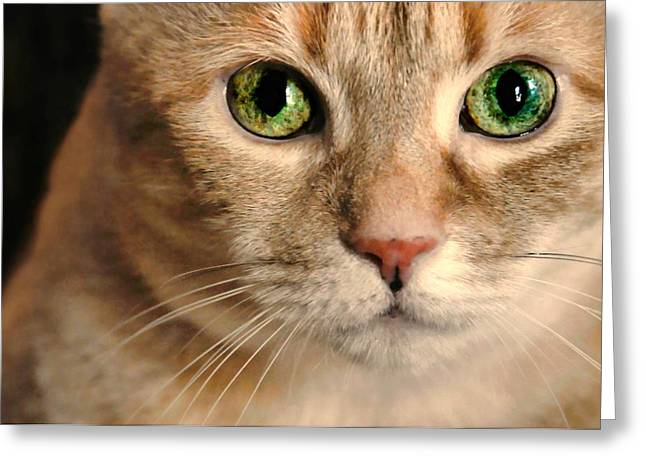 Cat Face Greeting Cards - My Eyes Adore You Greeting Card by Diana Angstadt