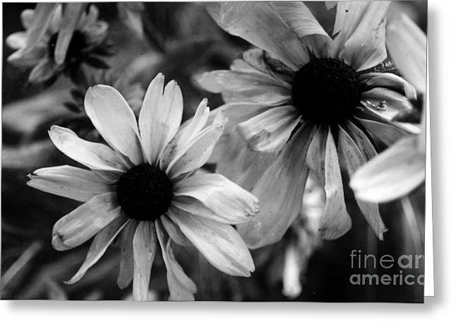 Daughter Gift Greeting Cards - My Fair Daisy Greeting Card by Kryztina Spence