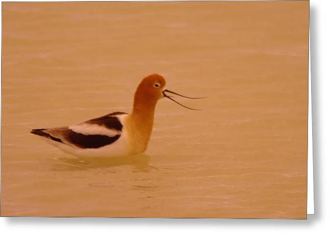 Migratory Bird Greeting Cards - My Favorite Dork Bird  Greeting Card by Jeff  Swan