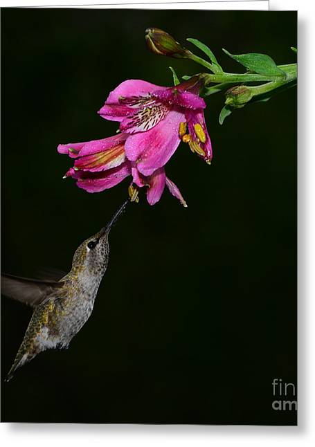 Feeding Birds Greeting Cards - My Favorite Flower Greeting Card by Peter Dang